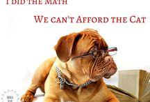Funny Pet Memes