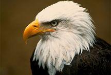 Be an Eagle