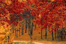 Fall foto ❣️