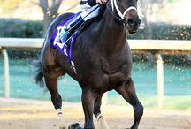 2014 Thoroughbred Horse Racing