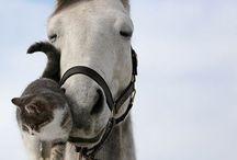 Horses :-)