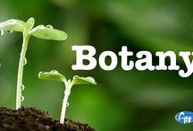 M.Sc (Botany)