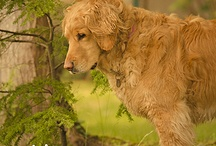 Puppy Love <3 / by Tori Lane