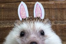 Hedgehogs <3