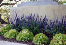 Drought tolerant landscape / Low water yard landscaping
