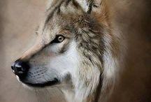 Wolves I ❤️