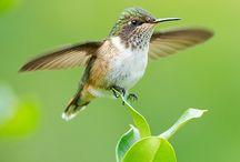Madárkák/Birds