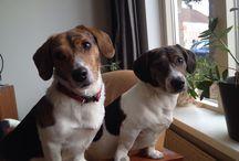 Dogs / Little rascals