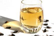 Plagas moscas, cucarachas ratas ect