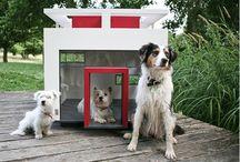 Craziest Dog Houses
