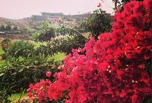 We love NATURE / Flora y Fauna en el Sheraton Gran Canaria Salobre Golf Resort