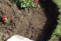 Love my garden / Garden ideas