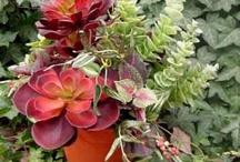 Gardens, Flowers & Plants