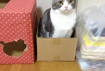 Tokyo surrenders to a hamster / Stories, writing resources, and cute pictures of Goo the cat!
