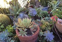 JUDY STEPHENSON QLD AUSTRALIA /  Mostly succulents and a few others