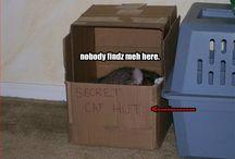 LOLcatz!!1!