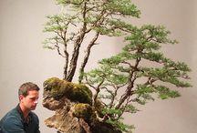 Bonsai Wälder und Landschaften
