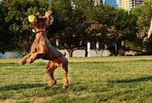 Austin / by Niki Prindle