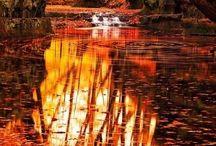 Aesthetic:autumn