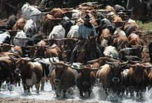 Giddy on up to the Chisholm Trail in Duncan, OK / Duncan, Oklahoma is on the original Chisholm Trail route that cowboys pushed cattle on from Texas to Kansas in the late 1800s. Make us your next destination! You might even see some longhorns along the highway (U.S. 81).