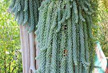 Plants - Terrariums | Succulents | Cactuses