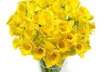 Rachael & Wayne / Platinum, lilac and lemon Spring time flowers March 2013