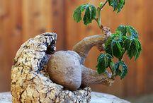 plants in unusual things