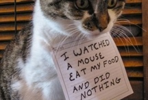 """Dog & Cat Shaming! / What does your pet do that is """"shame"""" worthy?"""