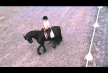 Horse Health & Training