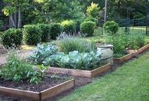 Garden time / by Darci Johnson