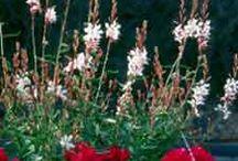 Perennial garden - mostly sunny / Gardening with perennials / by Denise Thomason