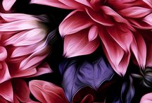 Florals by Arthur Jacob / Fine Art Photography-Digital Imagery & Abstracts