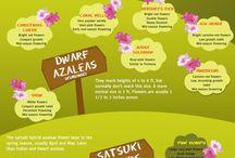 garden infographics