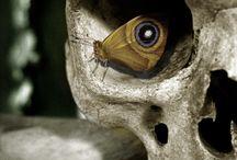 Skulls / by Jennie King