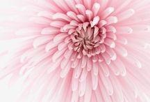 Roze / Roze Roze en nog eens roze.