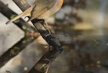 natur dyr fugler