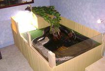 Schildkröte Teich