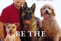 Dog training & tips