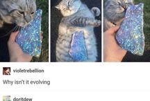 CATS ♥♥♥♥♥♥♥♥