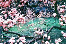 Spring Time / Spring inspiration