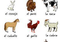 Espanol ANIMALES
