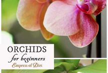 Green fingers - Orchids