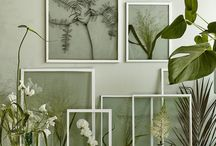 Plants glass frames