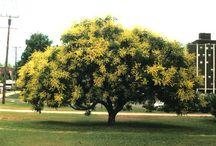 Favorite trees / by Graham Herbst