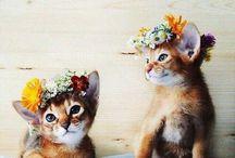 Pets / Pretty