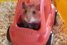 Hamsters ♡