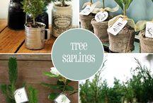 OLIVE TREE IDEAS