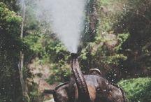 Elephants :) :) :) / by Monica Quinteros