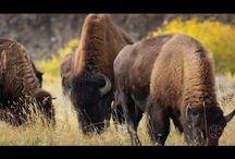 Parcuri nationale - National park