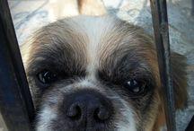 Σκυλιά / Dogs